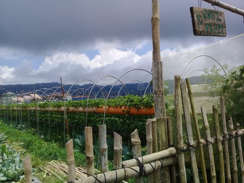 Landskap för jordgubbelantgårdtäppa fotografering för bildbyråer