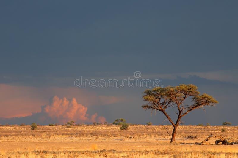 Landskap för Kalahari öken royaltyfri foto