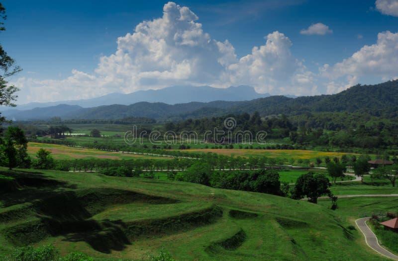 Landskap för koloni för grönt te för panorama, Chiang Rai, Thailand royaltyfria bilder