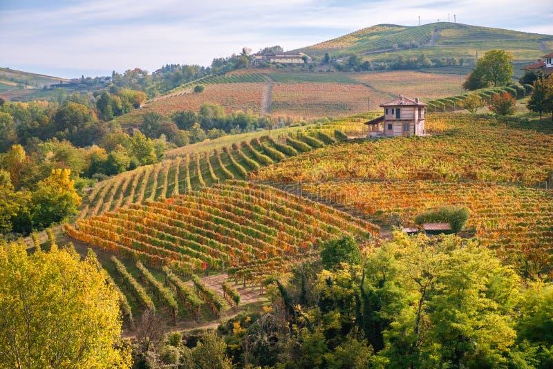 Landskap för Langhe Barolo vingårdkullar, Piedmont, Italien arkivbild