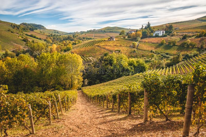 Landskap för Langhe e Roero vingårdhöst fotografering för bildbyråer