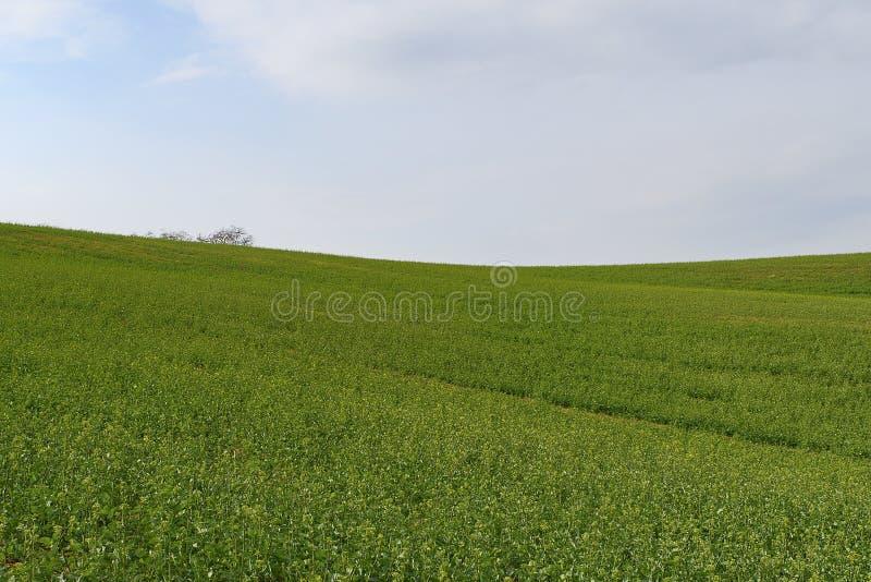 Landskap för Moravian gräsplanrullning skyen för showen för växter för rörelse för den förfallna för fältet för blueoklarhetsdage royaltyfri foto