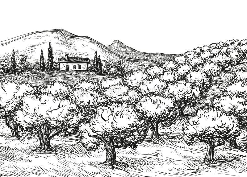 Landskap för olivgrön dunge vektor illustrationer