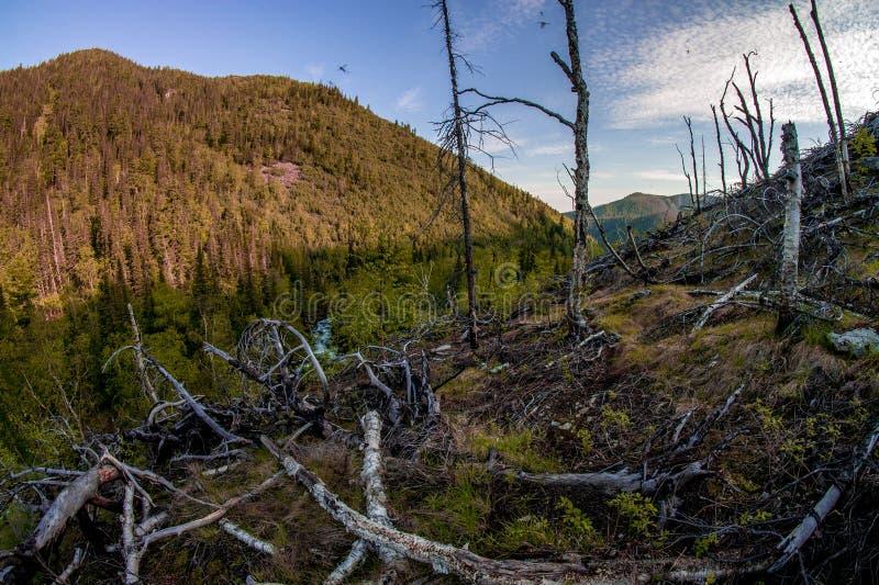 Landskap för område för Taiga skogbrandkatastrof efter en löpeld arkivbild
