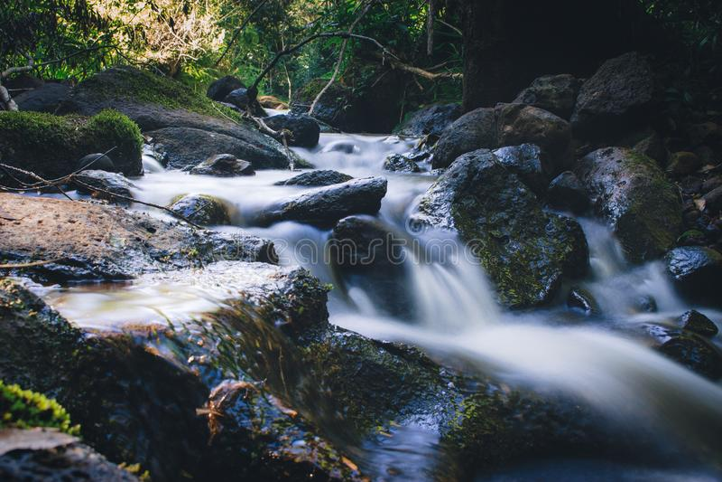 Landskap för Rainforestvårvatten exponering long arkivfoton