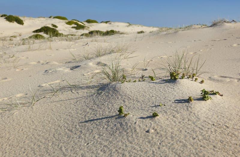Landskap för sanddyn. Fingal fjärd. Australien royaltyfria bilder