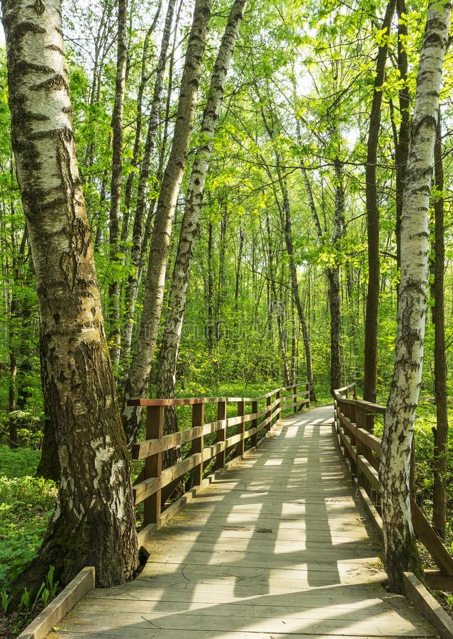 Landskap för skogträbrobana på en solig vårsommardag med vid liv träd för gräs och gräsplansidor på filialer på en parkera b arkivfoto
