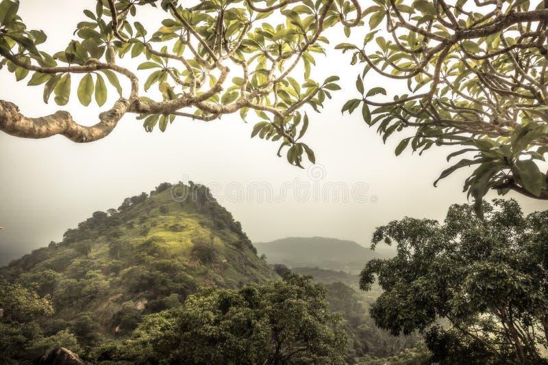 Landskap för Skotska högländernakulleskog med sikt från träden i Asien Sri Lanka Dambulla omgivning royaltyfri bild