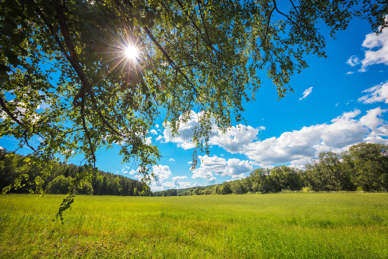 Landskap för sommarbakgrundsbegrepp; fält; solstrålar till och med trädkronan; blå himmel; vitmoln royaltyfri bild