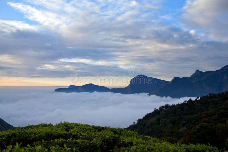 Landskap för tekolonier och bergi Kerala, Indien royaltyfri bild