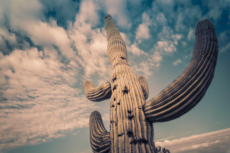 Landskap för träd för Arizona ökenkaktus royaltyfri foto