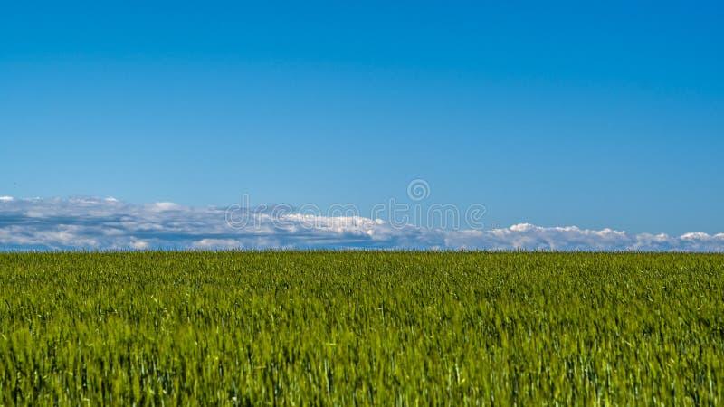 Landskap för vetefält på en härlig dag royaltyfri foto