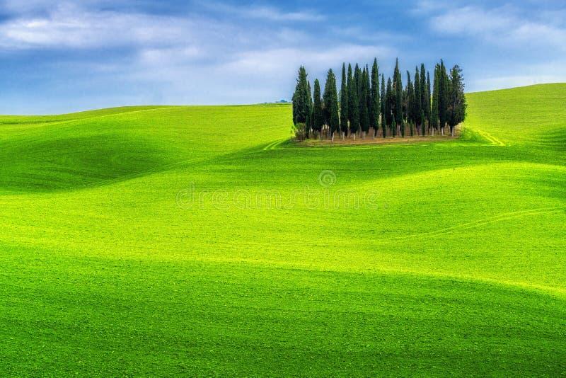 Landskap f?r gr?na kullar av Tuscany, Italien arkivbild