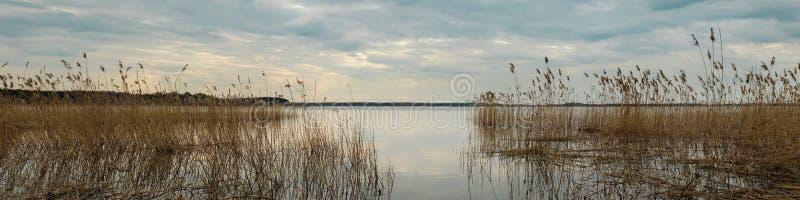 Landskap f?r v?rvatten bred panoramautsikt från kusten av sjön till och med de kust- vasserna på en molnig afton arkivfoto