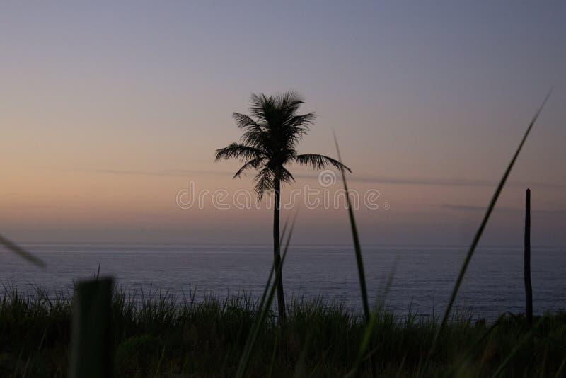 Landskap fotografi med växter och kokospalmen i förgrunden och sätta på land i bakgrunden royaltyfria foton