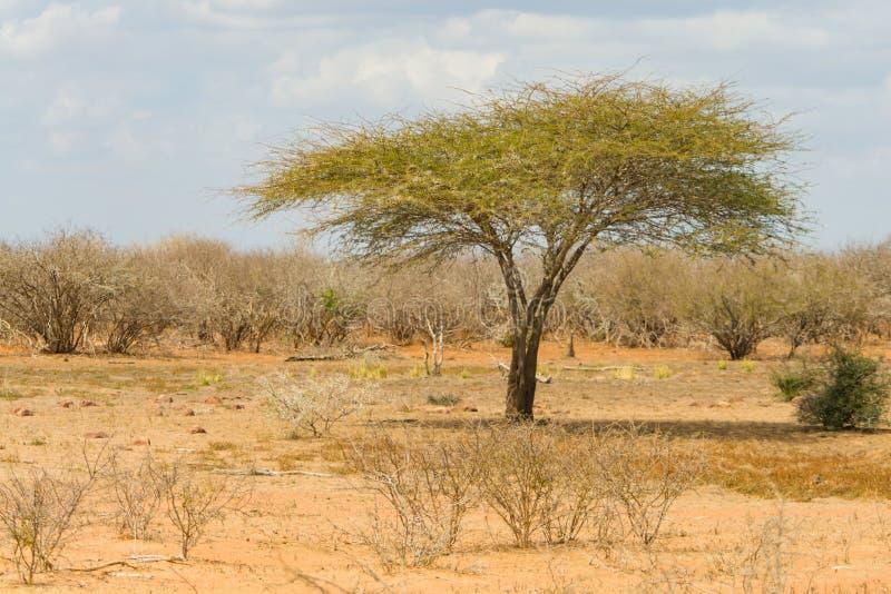Landskap i den Kruger nationalparken, Sydafrika arkivfoto