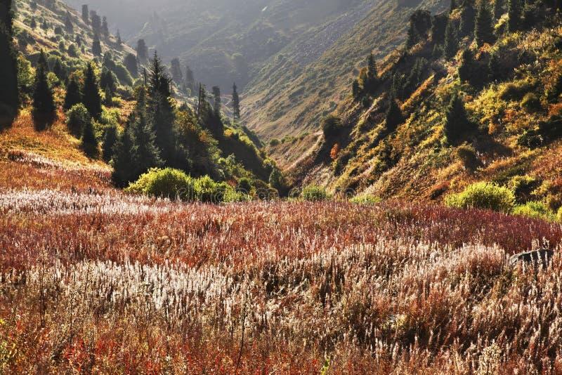 Landskap i den Medeo dalen kazakhstan arkivfoton