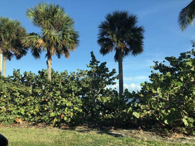 Landskap i Florida royaltyfri fotografi