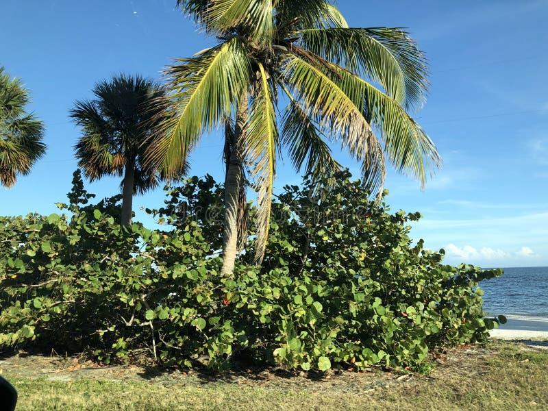 Landskap i Florida royaltyfria bilder