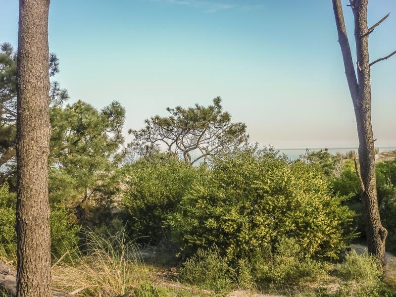 Landskap i kusten av Uruguay royaltyfri bild