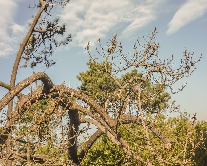 Landskap i kusten av Uruguay arkivfoton