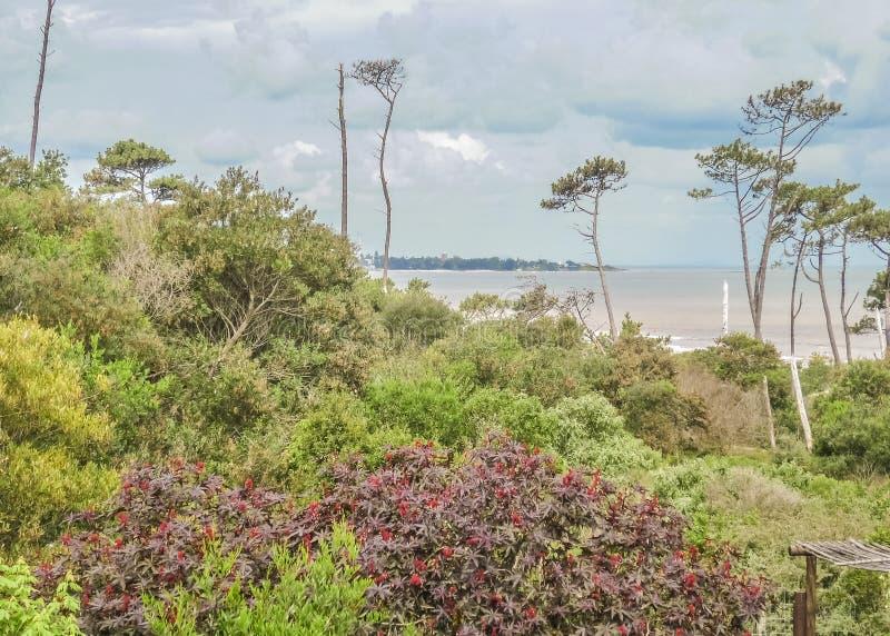 Landskap i kusten av Uruguay arkivbilder