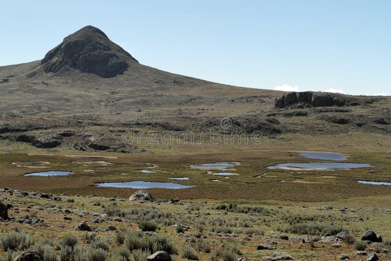 Landskap i nationalparkbalbergen i Etiopien royaltyfria foton