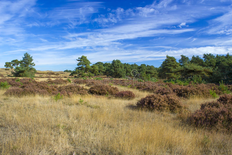 Landskap i nationalparken Hoge Veluwe i Nederländerna arkivfoto
