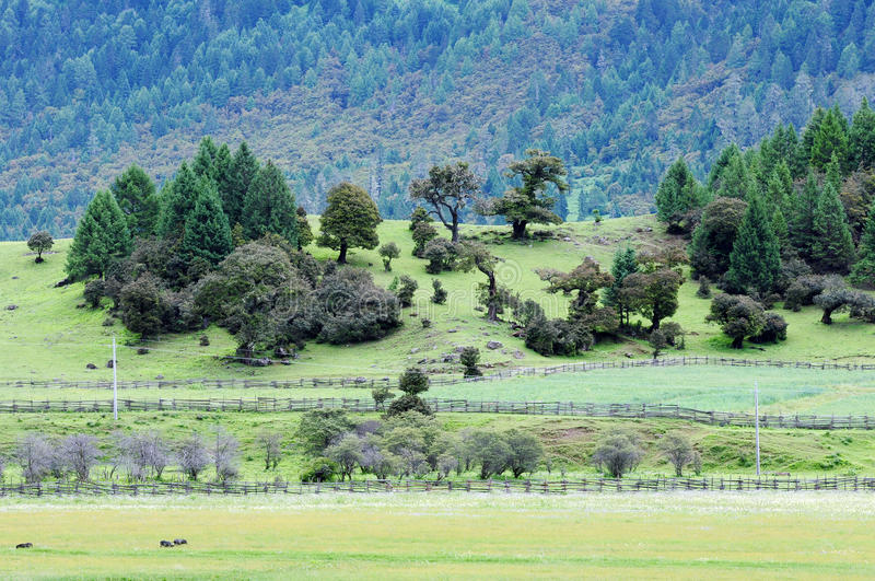 Landskap i Tibet arkivfoton