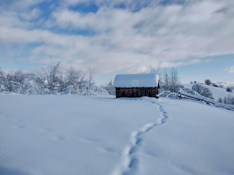 Landskap i vinter med monteringen och snö-laden träd i by av Parva, Rumänien, Transylvania royaltyfri bild