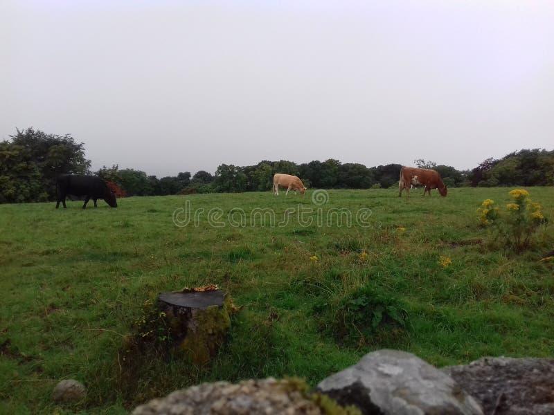 Landskap Irland arkivfoton