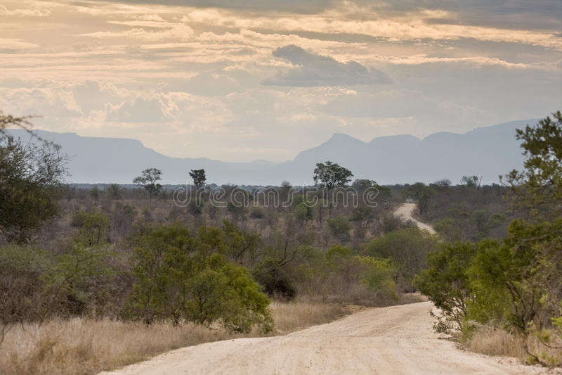 Landskap krugerbushveld, Kruger nationalpark, SYDAFRIKA fotografering för bildbyråer