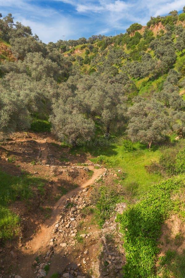 Landskap med banan bland kullar arkivbild