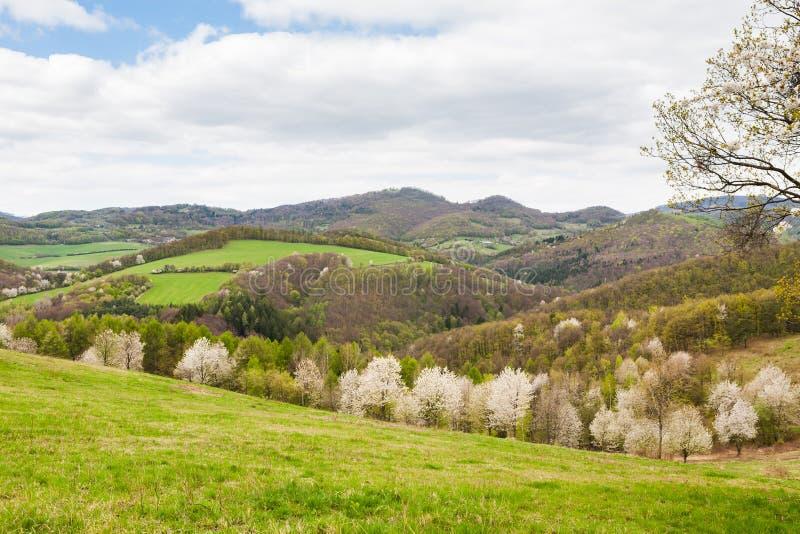 Landskap med blommande plommonträd arkivbild