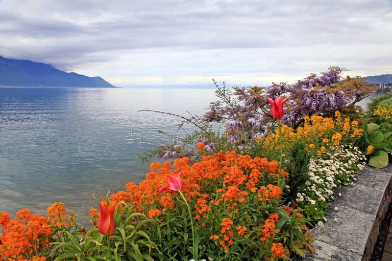 Landskap med blommor och sjöGenève, Montreux, Schweiz. arkivbild