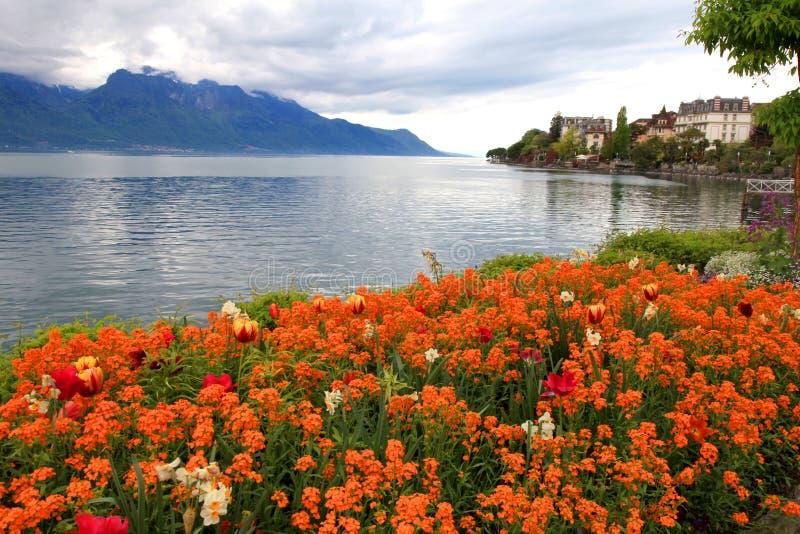 Landskap med blommor och sjöGenève, Montreux, Schweiz. royaltyfri fotografi