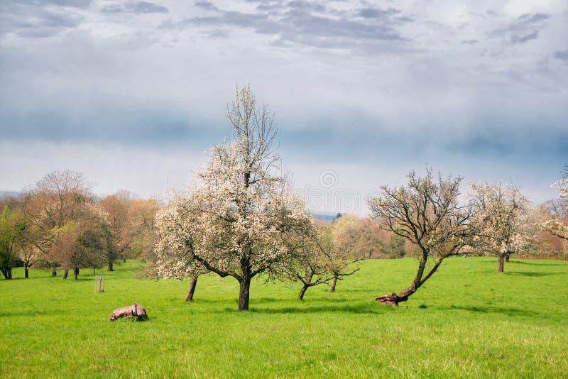 Landskap med blomningträd royaltyfri fotografi