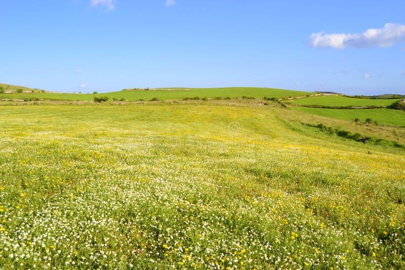 Landskap med den blommiga ängen arkivfoto
