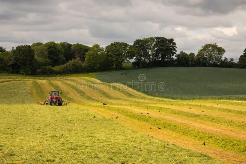 Landskap med den röda traktoren som mejar på bergig irländsk lantgård arkivbilder