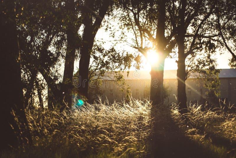 Landskap med den solnedgången träd arkivfoto