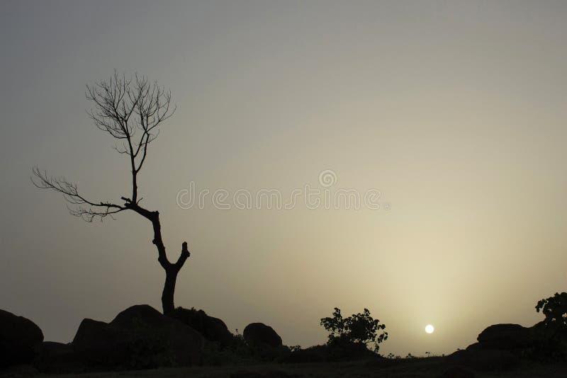 Landskap med det torkade trädet under solnedgång, Maharashtra, Indien arkivfoton