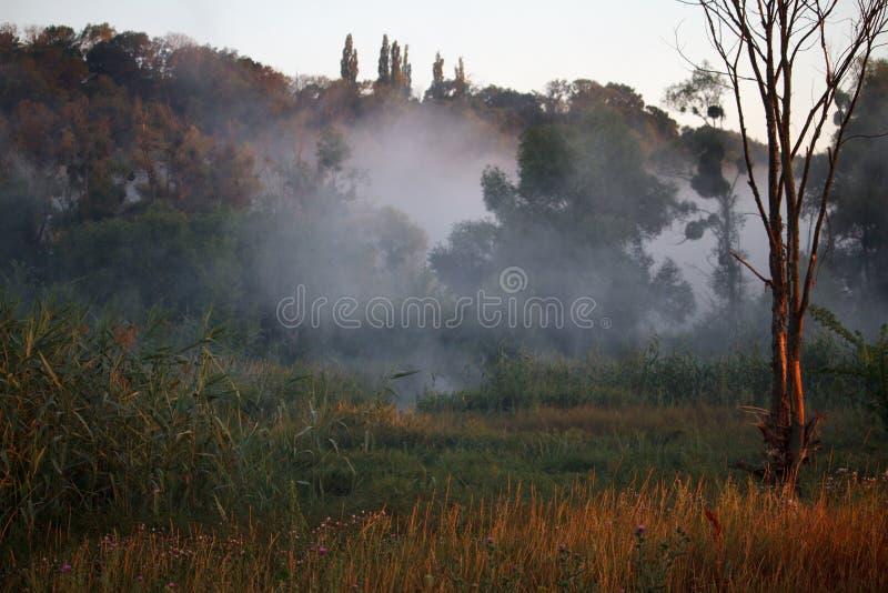 Landskap med dimma över träskfloden och det gamla trädet med busksnår av vasser, selektiv fokus royaltyfria foton
