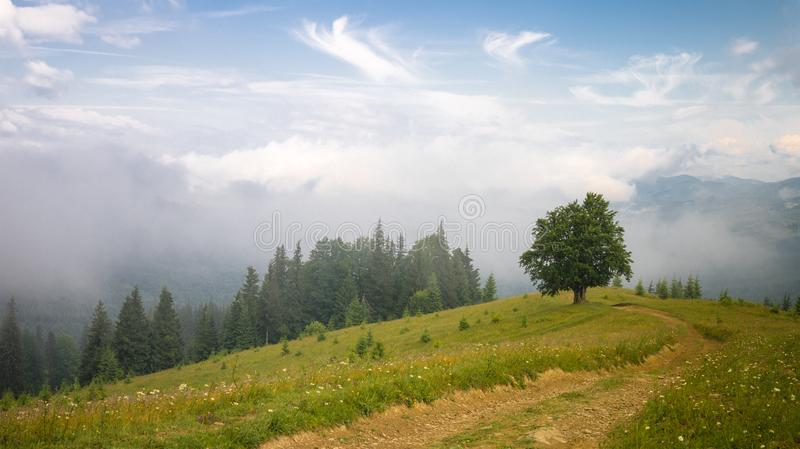 Landskap med dimma, det ensamma trädet, grusvägen och granskogen i berg arkivbilder