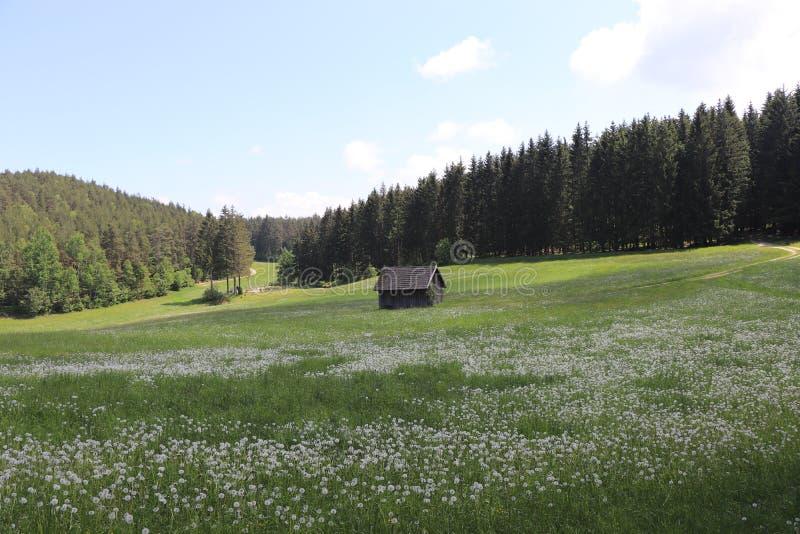 Landskap med ett hus royaltyfria foton