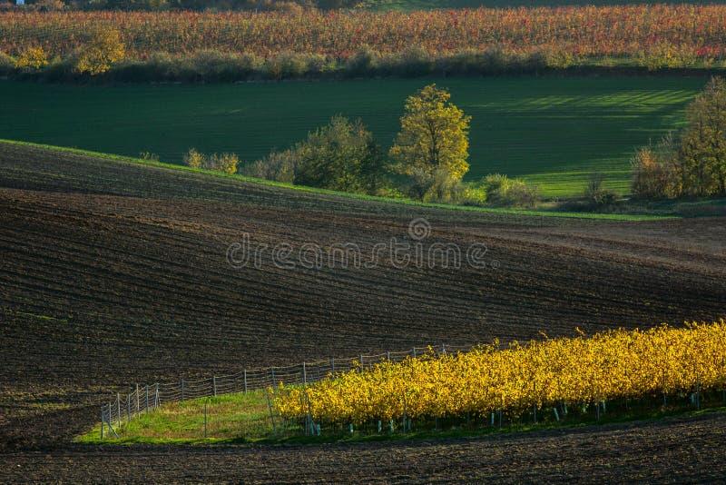 Landskap med fält för kullar för vågor gröna och gula, Södra Morav arkivbild