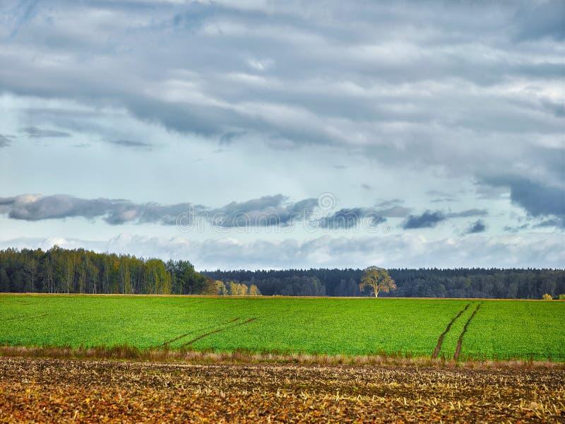 Landskap med fält och moln arkivbild