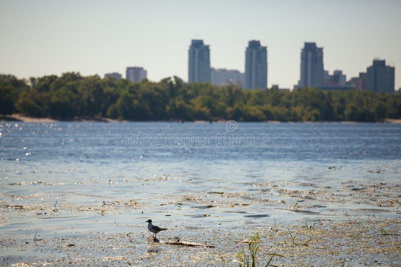Landskap med fågeln royaltyfria foton
