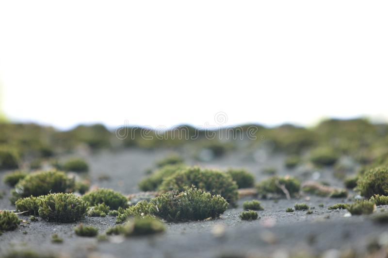 Landskap med gammal mossa, lav Naturlig bakgrund med grå smutsig mossa, gräs, lav som växer på jordningen Bild för skrivbord royaltyfri bild