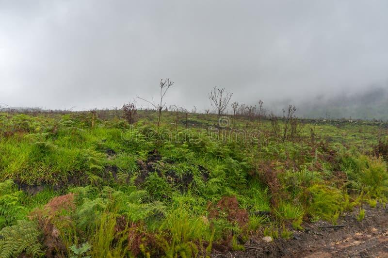 Landskap med gröngräs på bränd svart jord Wildfire, bushfire-förstörelse arkivfoto