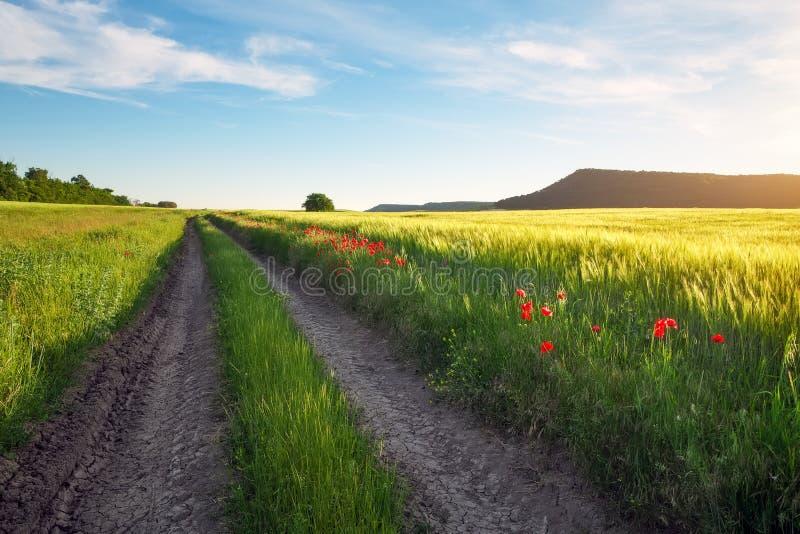 Landskap med grusvägen mellan ängen tidigt på våren royaltyfri fotografi